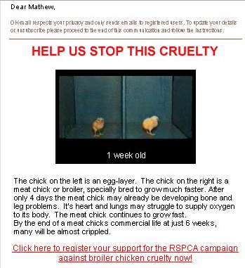 RSPCA chickens